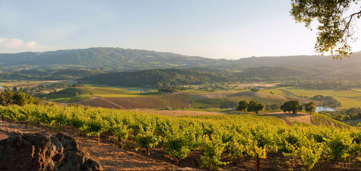 Photo of Sonoma Valley