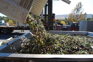 Photo of Olive Press