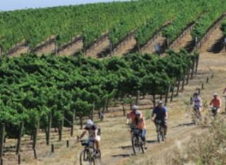 Photo of Sonoma Valley Bike Tours