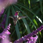 Image Humming bird