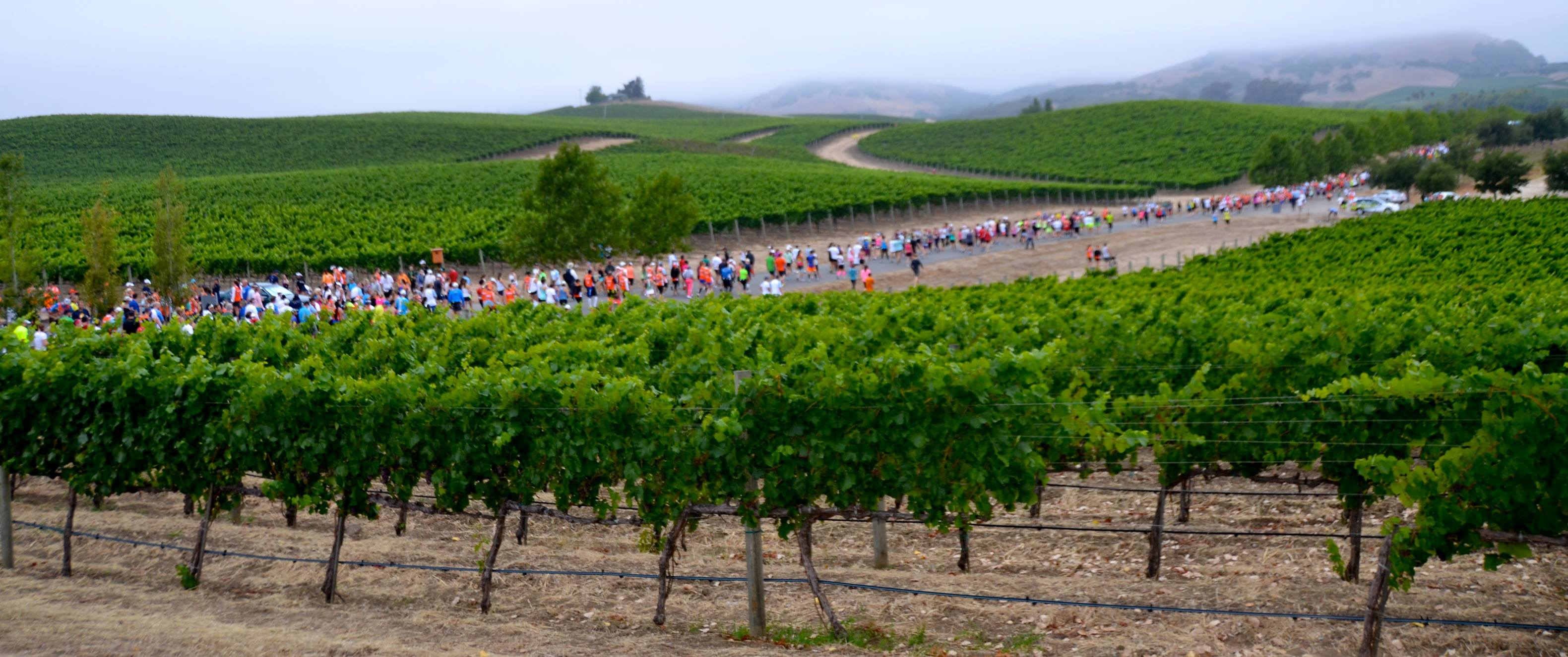 Napa To Sonoma Wine Country Half Marathon Best In Sonoma